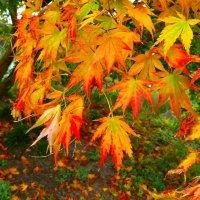 Осенние листья :: Nina Yudicheva