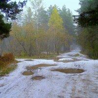 Снег кружится , летает , летает ... :: Мила Бовкун