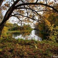 Осень в Воронинском заповеднике :: Сергей