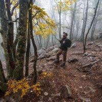 Облачный лес :: Екатерина Никифорова