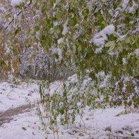 Первый снег---10 :: Владимир Холодный