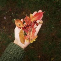Automn in the hand :: Дарья Зеевальд