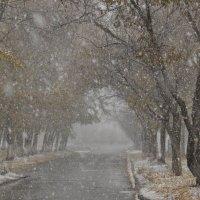 Осень :: Майя Смехова