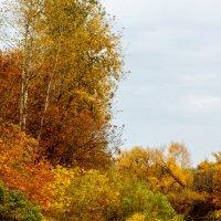 золотая осень :: Надежда Щупленкова