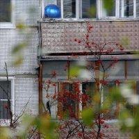 А шарик вернулся, а он голубой. :: Валерия  Полещикова