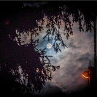 Зловещая луна :: Денис