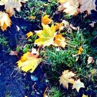 Осень :: Вероника Озем