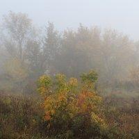 Туман :: Виктор Ковчин