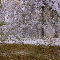 Первый снег---12 :: Владимир Холодный