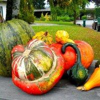 Урожай :: Наталья Александрова
