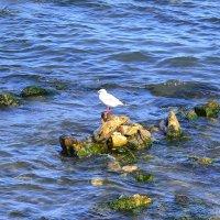 Одинокая чайка :: Виктор Шандыбин