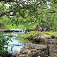 Природа ЮАР :: Julia A