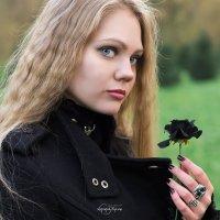 Чёрная роза :: Руслан Комаров