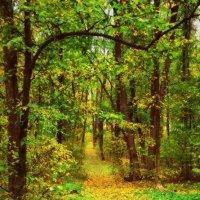 Тропинка в осень... :: *MIRA* **