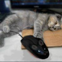 Кошка,живущая не в природе, знает о мышке лишь по наслышке... :: Людмила Богданова (Скачко)