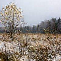 Скоро зима... :: Sergey Apinis