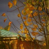 воздух свеж :: Дмитрий Потапов