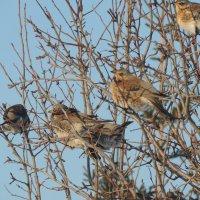 Птицы :: Филарит
