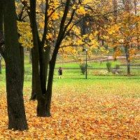 Осенний день на Куракиной даче :: Ирина Румянцева