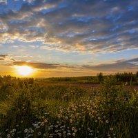 Тёплым летним вечером :: Алексей Писарев