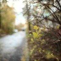 Осень :: Evgenii Zlobin