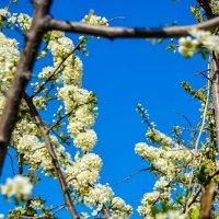 Это была весна :: Света Кондрашова