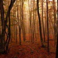 Рассвет на склоне горы Ай-Петри, Крым. :: Владимир Горубин