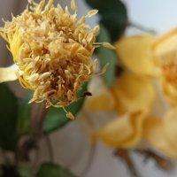 Вот такая серцевинка от розы осталась ... :: Galina194701