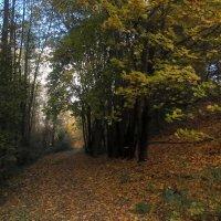 Осенний парк :: Сергей Рубан