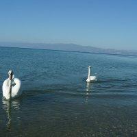 Лебединное озеро :: Bogdan Snegureac