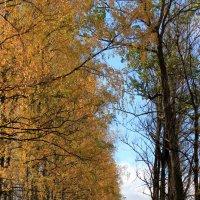 Пока еще зеленая трава... :: Наталья Лунева