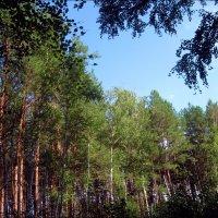 Лесной пейзаж :: Татьяна Пальчикова
