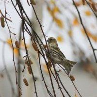 Осень, ветер... :: Ната Волга