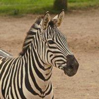 В зоопарке Лимы :: Svetlana Plasentsiia