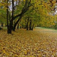 Осенние ковры :: Miola