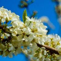 цветики :: Света Кондрашова