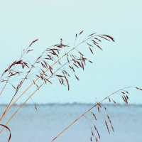 Травинка на ветру :: Вера Моисеева