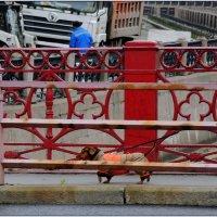 непарадный Красный мост :: sv.kaschuk