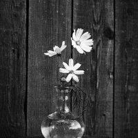 Бабушкины  цветы :: Наталья Казанцева