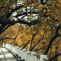 Нижегородская осень :: Tashinni Alseronni