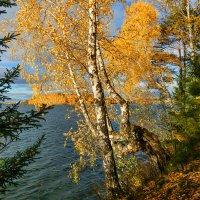 Осенний берег :: vladimir