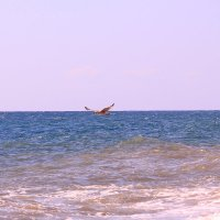 О, море, море :: Татьяна Ломтева