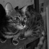 Кошка в ожидании хозяина :: morgo