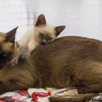 Мама Я тебя люблю! -из серии Кошки очарование мое! :: Shmual Hava Retro