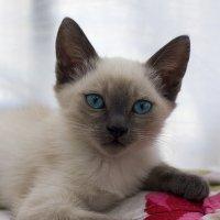 Марсик-из серии Кошки очарование мое! :: Shmual Hava Retro