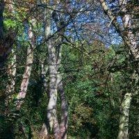 Тропинка через лес :: Дмитрий Сорокин
