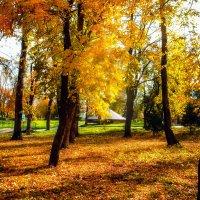 В парке :: Вячеслав Баширов