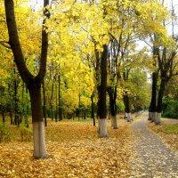 В парке осенью :: Елена Семигина