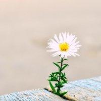 Осенний цветочек :: Марина Романова