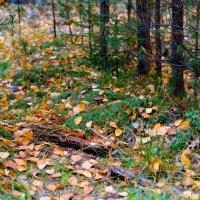 Осенний лес :: Юрий Бичеров